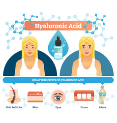 hyaluronic acid anti aging vector image