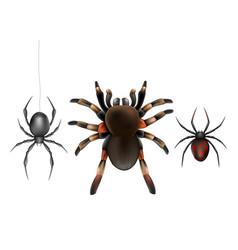 Poisonous spiders species realistic set vector