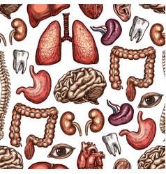 anatomy seamless pattern background human organ vector image