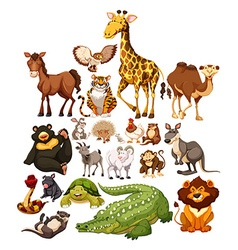 Different type of wild animals vector