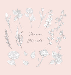 hand drawn florals flowers plants herbs vector image