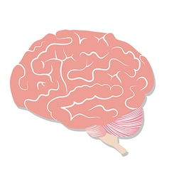 Brain on white background vector image vector image