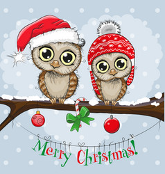 greeting christmas card two owls vector image
