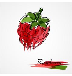 Raspberry fruit vector image vector image