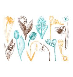 Botanical of springtime plants vector