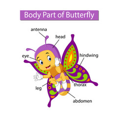 Diagram showing body part butterfly vector