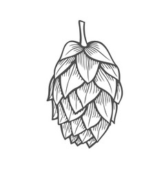 hand drawn of hops vector image