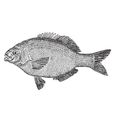 Perch vintage vector