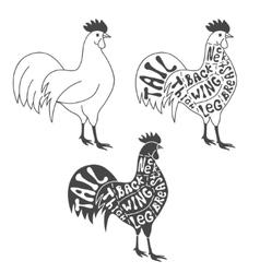 Butcher cuts scheme of chicken vector image