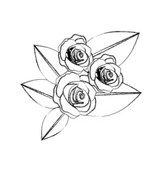 monochrome blurred contour of bouquet bud roses vector image vector image