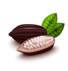 realistic 3d cocoa beans set vector image vector image