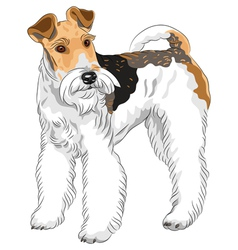 Dog Wire Fox Terrier breed standing vector