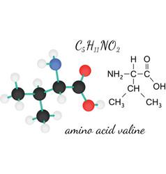 C5H11NO2 valine amino acid molecule vector