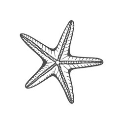 hand drawn marine starfish vector image