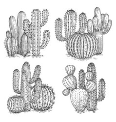hand sketched cactus desert vector image