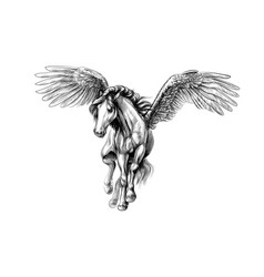 pegasus mythical winged horse hand drawn sketch vector image