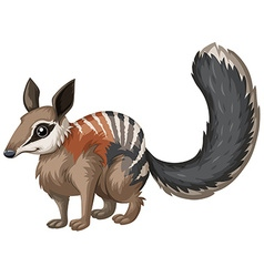 Wild numbat with happy face vector image