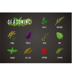 spices and seasoning cooking ingredients vector image