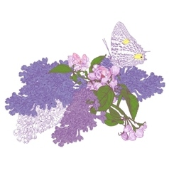 Big Butterfly Sitting Down on Blooming Lilac and vector
