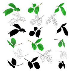 branches of roses with leaves natural outline vector image