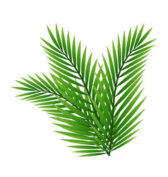 green leaves palm tree isolated on white vector image