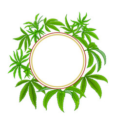 hemp plant frame on white background vector image
