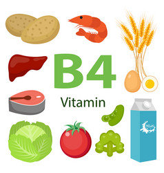 Vitamin b4 nutrition infographic with medical and vector