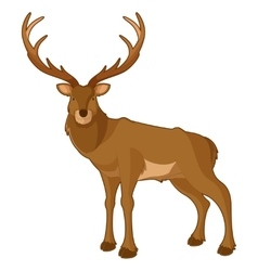 Cartoon smiling deer vector