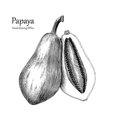 Papaya hand drawing vintage style vector