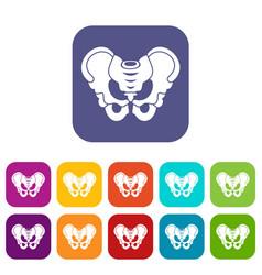 pelvis icons set vector image