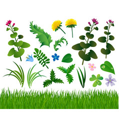 herbs and wild flowers set isolated on white vector image