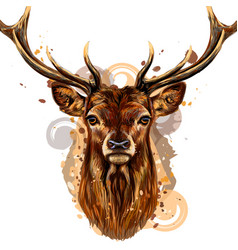 deer artistic colored hand-drawn portrait vector image