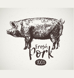 graphical pig and inscription hand drawing vector image