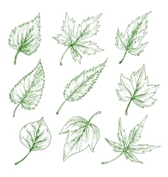 Green tree leaves sketches set vector