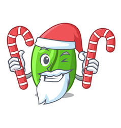 Santa with candy green coffee beans isolated on vector