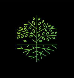 tree root hexagonal outline logo icon vector image