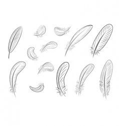 feather vector image vector image