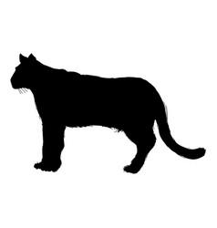 pictogram cougar or mountain lion portrait animal vector image