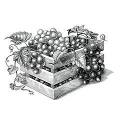 antique engraving organic grapes in basket vector image