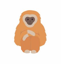 Gibbon primate mammal monkey isolated on white vector
