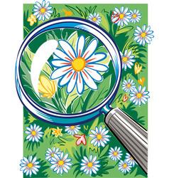 Magnifier highlights a beautiful daisy vector