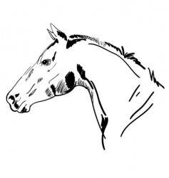 stallion sketch vector image