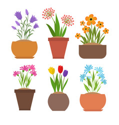 garden spring flowers in flower pots set vector image