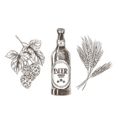 Hop and wheat bunches isolated beer ingredients vector