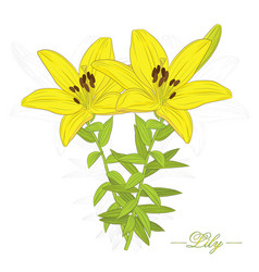 Lily flower-2-02 vector