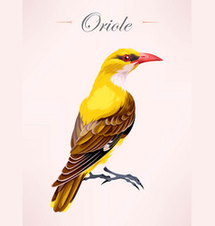 oriole bird vector image