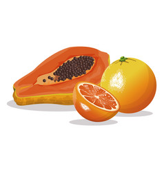 Papaya orange fruit fresh harvest vector