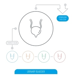 Urinary bladder icon Human body organ sign vector image vector image