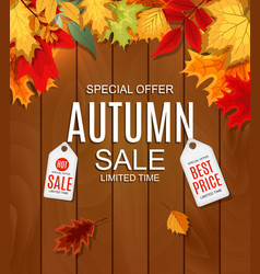 abstract autumn sale vector image