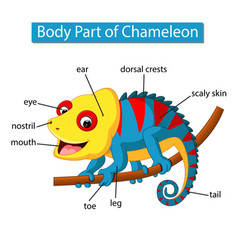 Diagram showing body part chameleon vector